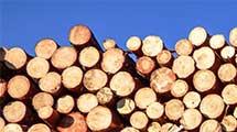 lumber-(2)